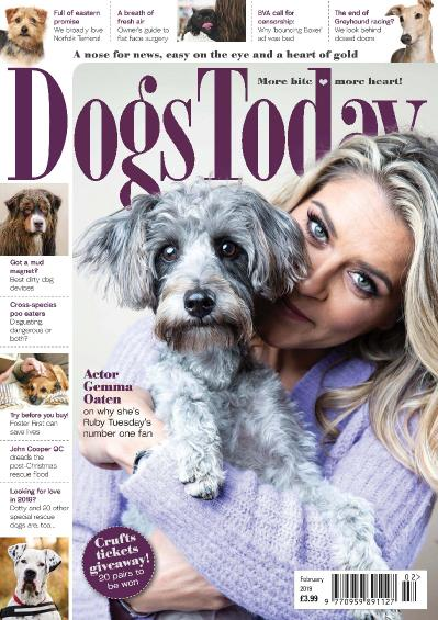 Dogs Today UK  February (2019)